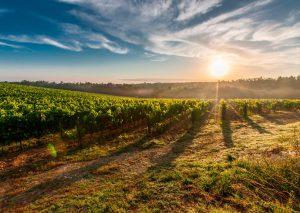 El valle del Carche en Jumilla es un entorno idílico para conocer el vino Carchelo